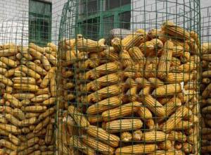 圈玉米网1.jpg
