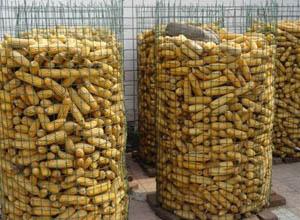圈玉米网2.jpg